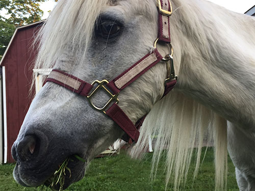 White Tale The Pony