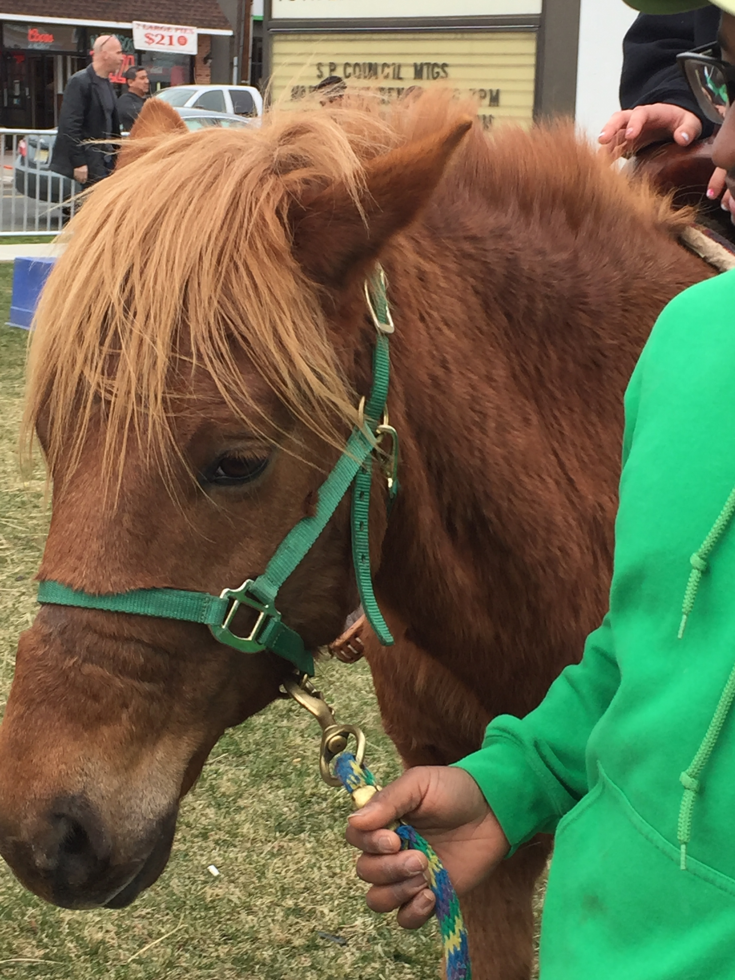 St. Patrick's Day festival close up of Pie the pony