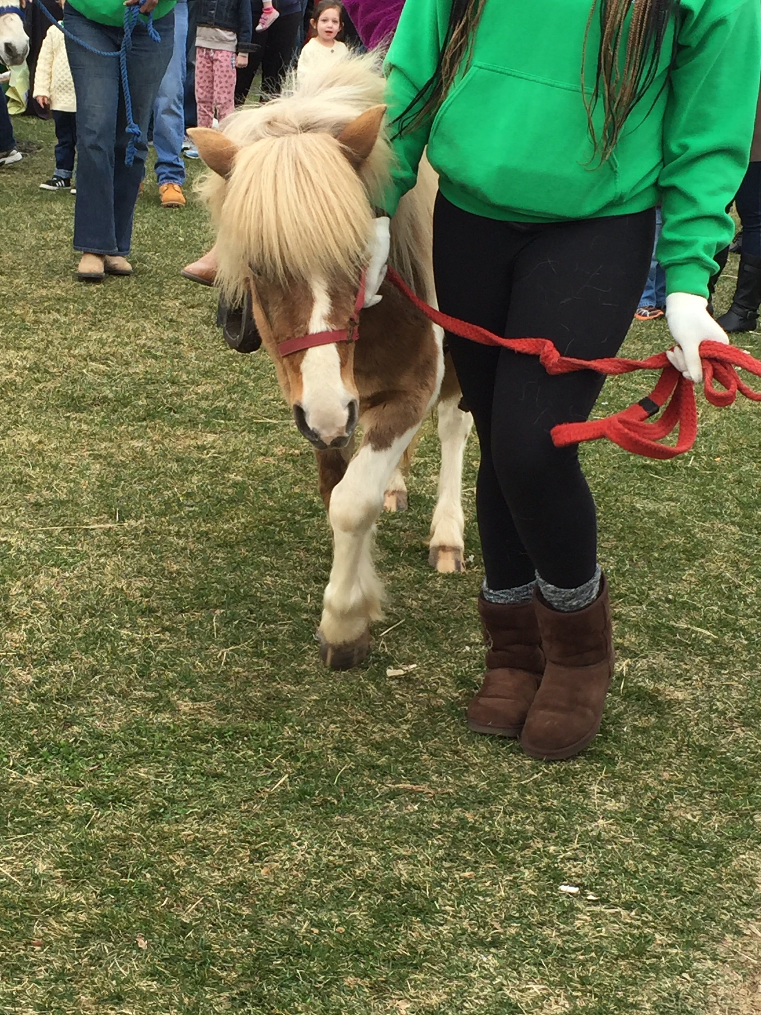 St. Patrick's Day festival pony rides with Bubba