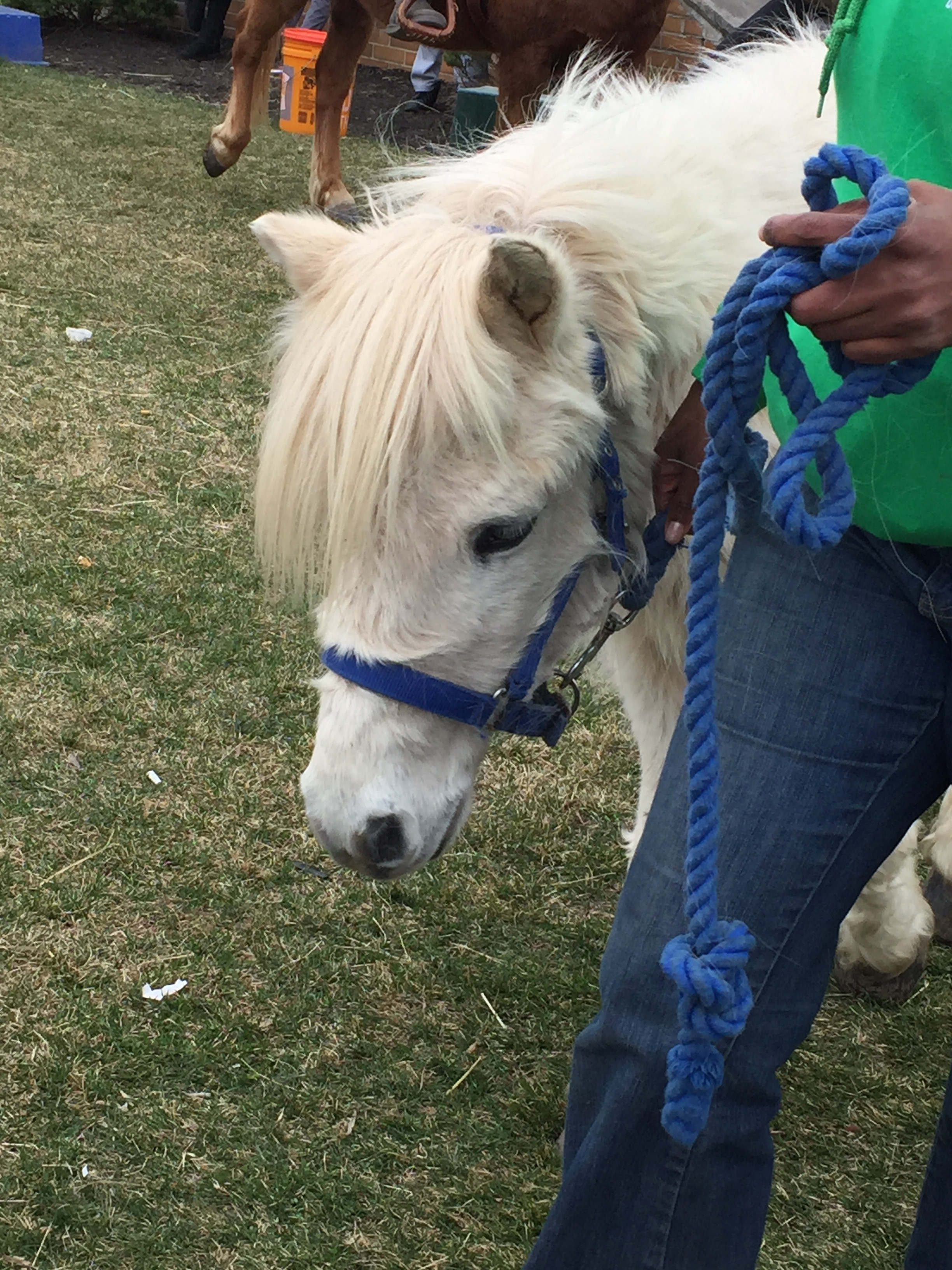 St. Patrick's Day festival photo op with Whitetale the pony